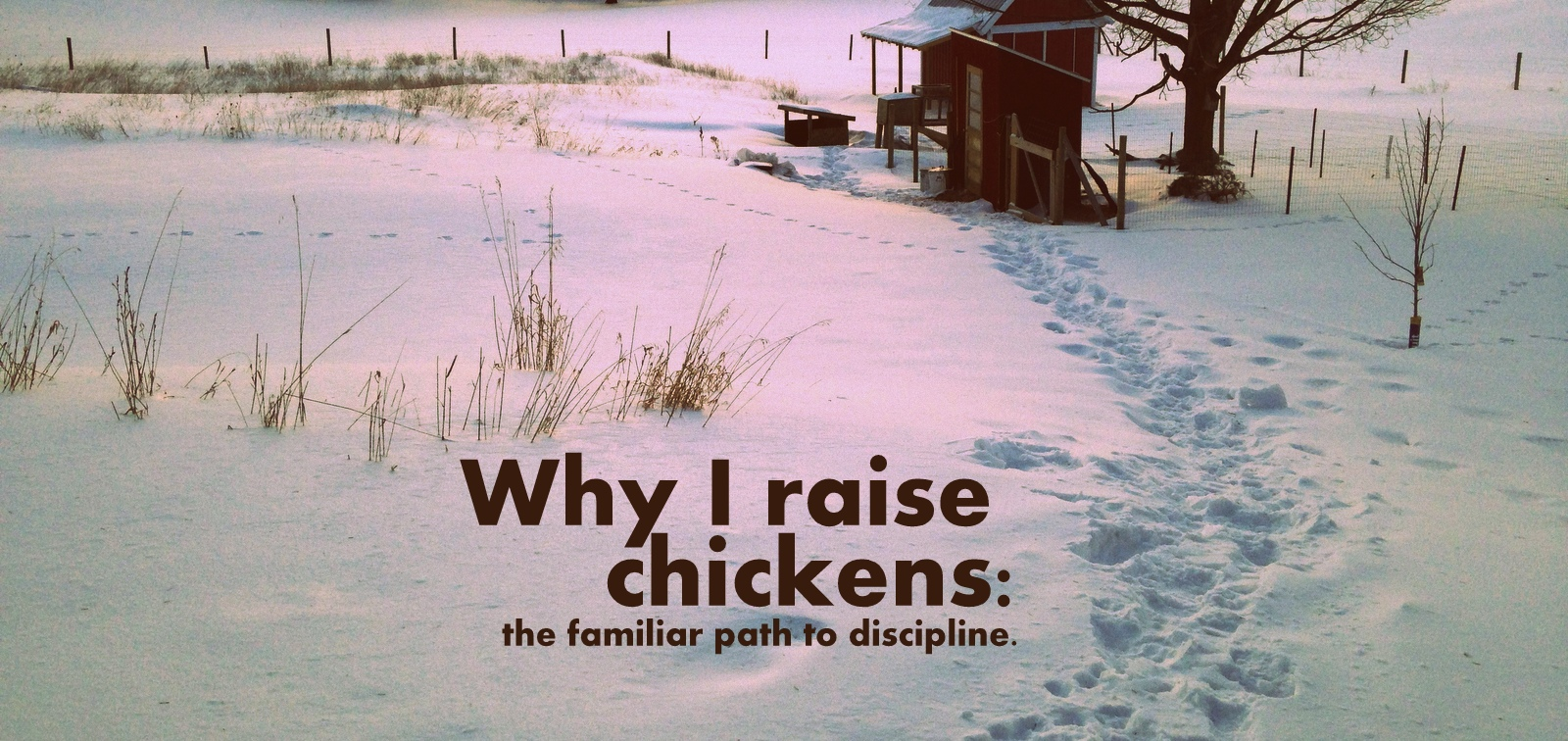 Why I Raise Chickens The Familiar Path To Discipline